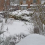 Front garden this afternoon