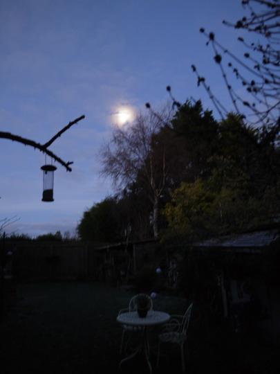 Garden in Moonlight...
