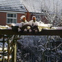BILL & BEN THE SNOWMEN COLD (BRR)