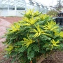 P1060600_botanics