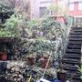 """""""Gardeners' Handywork (Hedera helix (English ivy))"""