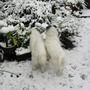 nearly lost my dogs in the snow