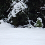 Another strange snow pet in my winter garden
