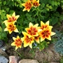 Gardenmove1_095