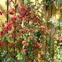 Euonymus, Cotoneaster and Eucalyptus in the sunshine