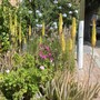 Neighbourhood_plantings_sidewalk