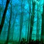 Woods in blue
