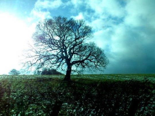 Wonderful oak