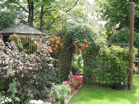 my garden 447
