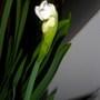 February 16 2013 paperwhites 004