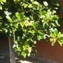 Plant_pics_02_16_13_19_