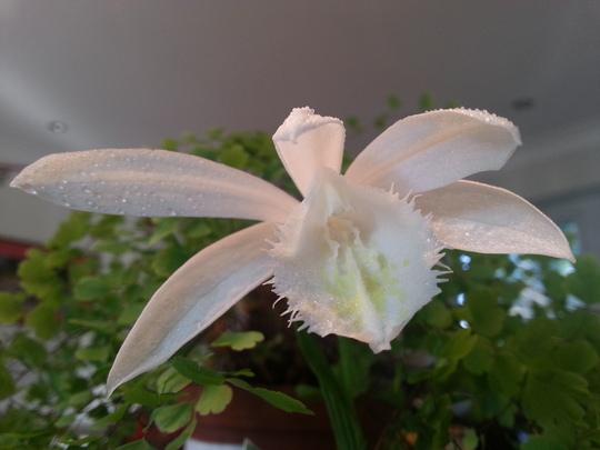 sparkling white!