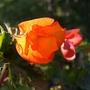 Gardenmove1_128goy