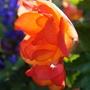 Gardenmove1_129goy