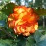 Gardenmove1_124cropgoy