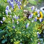 Gardenmove1_145autogoy
