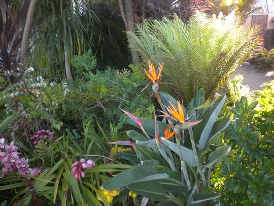 Cymbidium Hybrid Orchids, Bird-of-Paradise and Dwarf Fijian Tree Fern (Blechnum gibbum) (Cymbidium; Bird-of-Paradise; Blechnum gibbum)