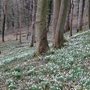 The woods were carpeted with white - amazing