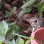 Garden_visitor