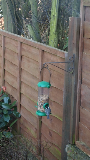 Great Tit at the feeder!