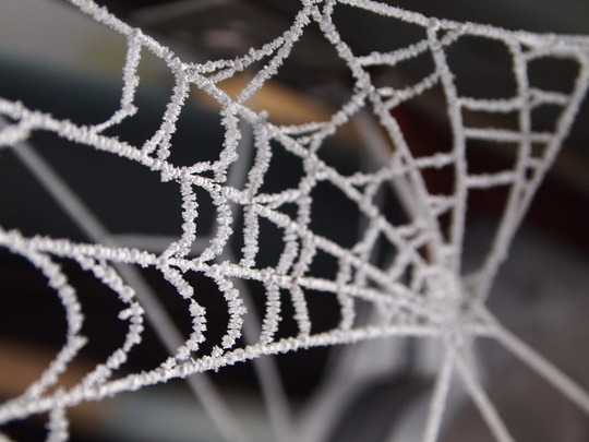 Lovely how frost forms on the spider's web...