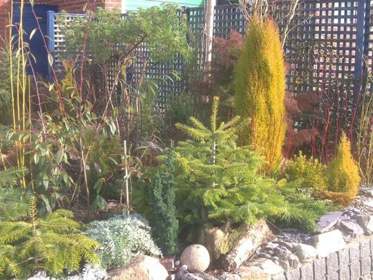Front garden corner
