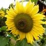 Gardenmove1_157autogoy