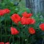 Gardenmove1_167goy