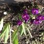 Spring-at last