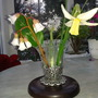 Three Flowers - Ypsilandra thibetica  Bergenia emeinsis  Narcissi sailboat