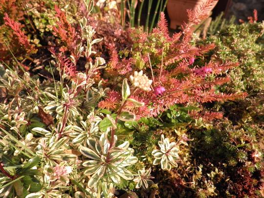 Rockery trolly colours awakening in the sun