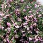 Garden9_3_2013_001