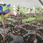 seedlings..:-)