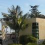 Kentia Palms (Howea fosteriana) (Kentia Palms (Howea fosteriana))