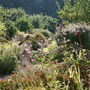 Garden_view