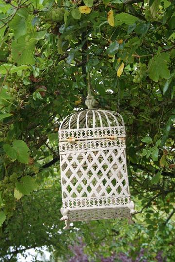 lantern_amongst_vine.jpg