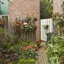 Border in the back garden