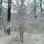 Snow in the wood - last weekend