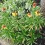 Cimg9007wallflower