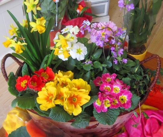 Fancy Plants arrangement