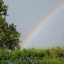 \rainbow