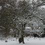 Crabapple_snow