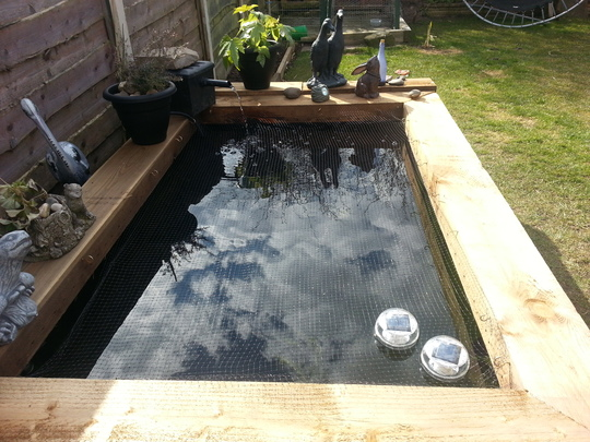 my new pond (what is the best water plant for my pond)