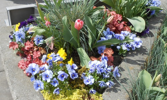 Pretty spring plantings on Ferry Terminal in Port Angeles, Washington, USA