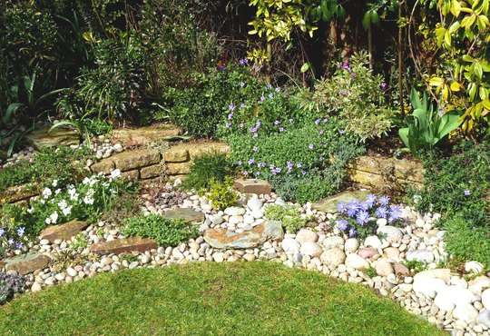 Pebble Garden Arabis Anemones And Aubrieta