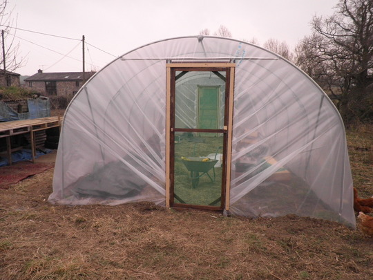Polytunnel today