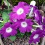 14_4_2013few_april_flowers_002
