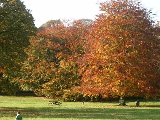 Another autumn photo!