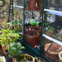 Greenhouse_spring