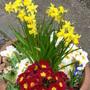 birthday and garden 2013 004